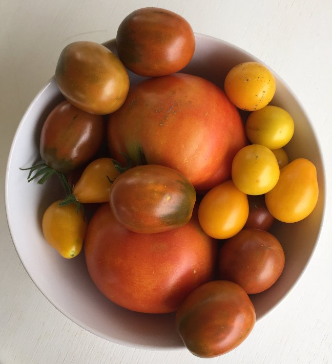 first-tomatos-2016