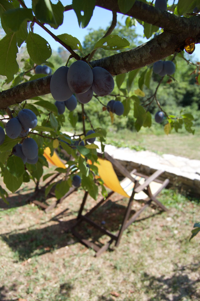 Pruga - deckchairs with plums