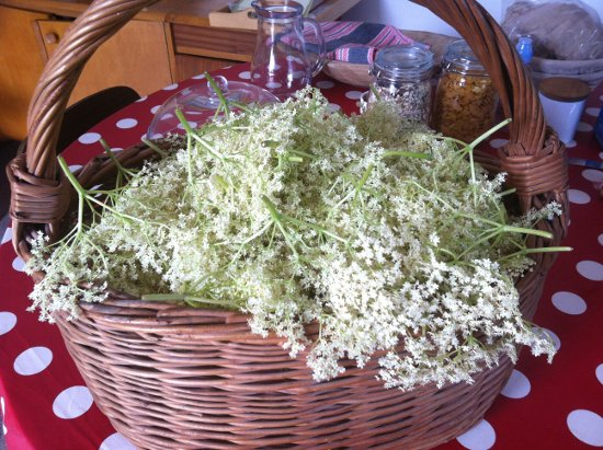 Elderflower cordial – best recipe ever if you like it lemony