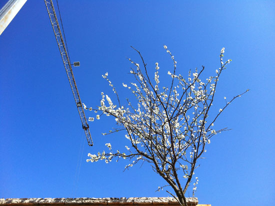 Spring and the crane