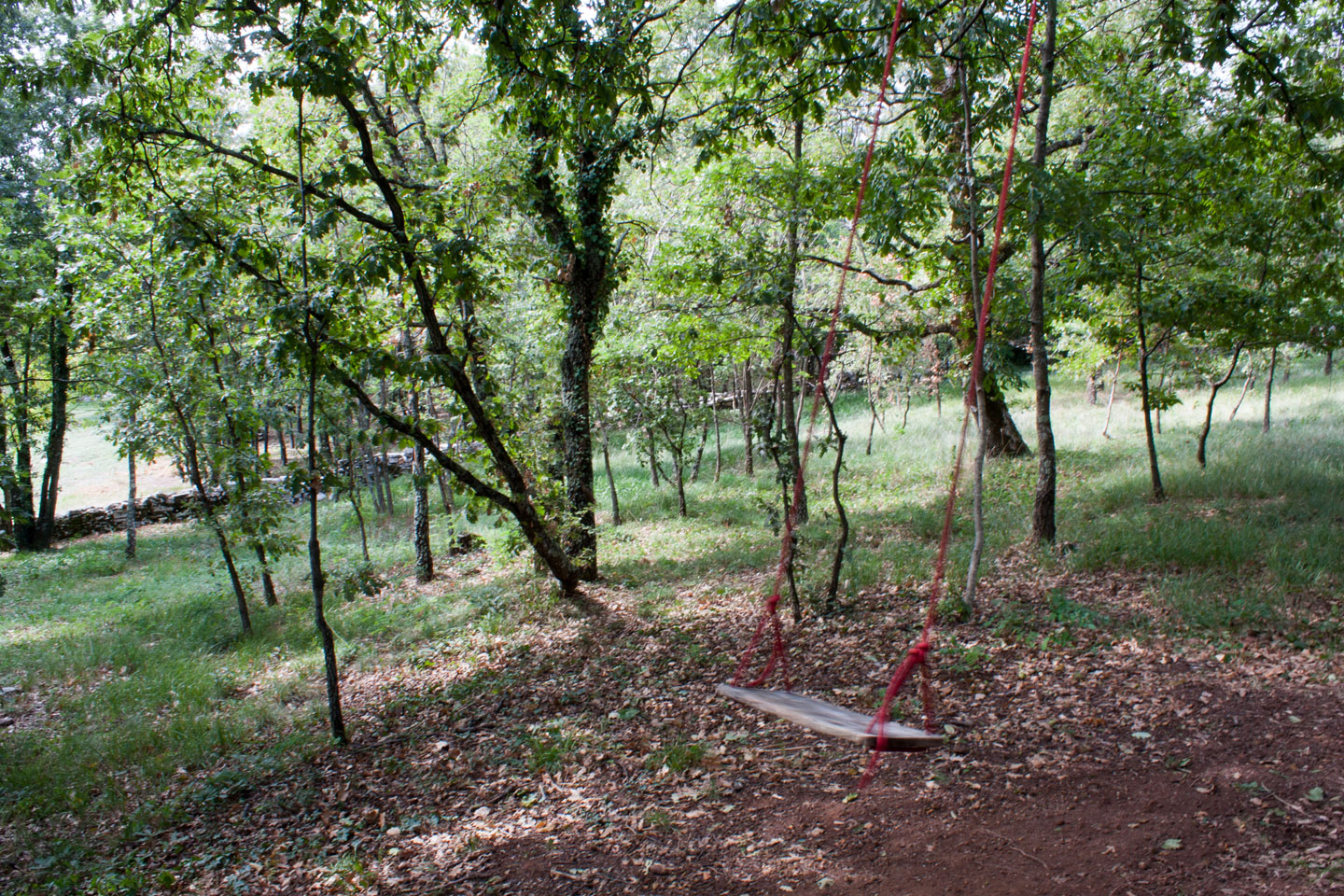 Swing in our woods